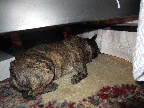 Bodger under bed