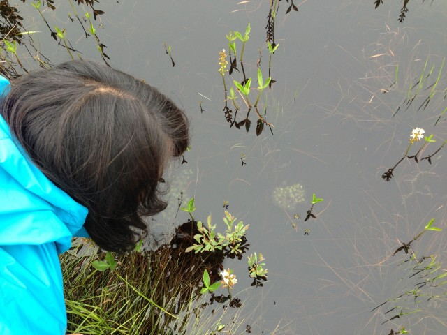 Looking at tadpoles