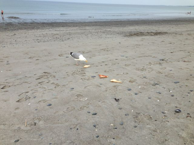 seagull with pizza