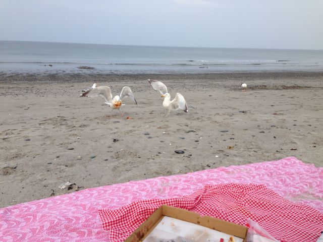 seagulls fighting over pizza