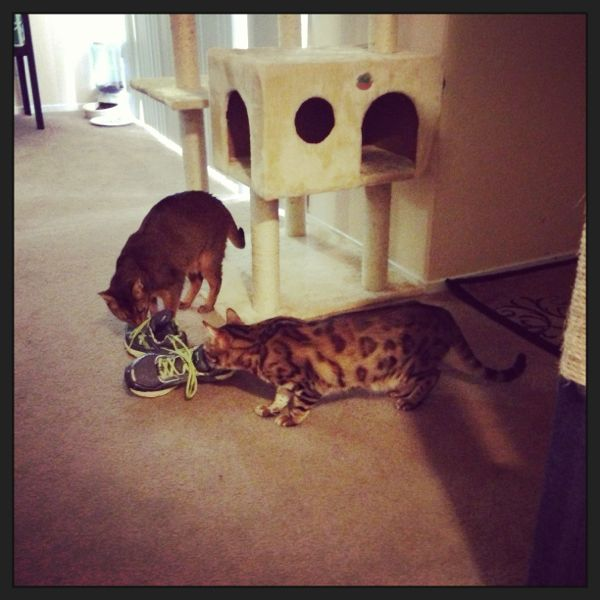 Leon & Winston sniffing my shoes