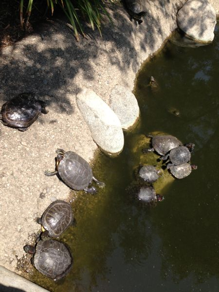 CalTech turtles